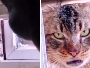 Stray Cat Harasses House Cat 'Come outside'