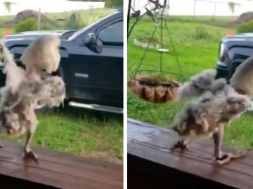 Bird Really Gets Down While Listening to The 'Humpty Dance'