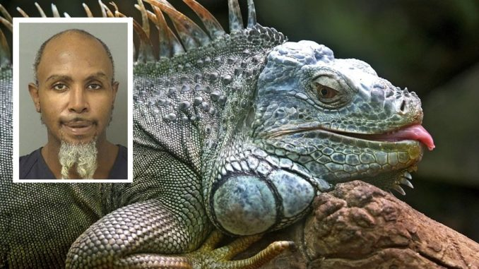 Florida Man Uses 'Stand Your Ground' Defense After Beating Iguana To Death