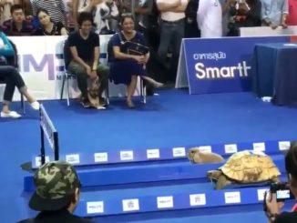 Tortoise Versus Hare In Live Action