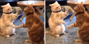 Guess What Hand-Clapping Game These Cats Are Playing In This Viral Video