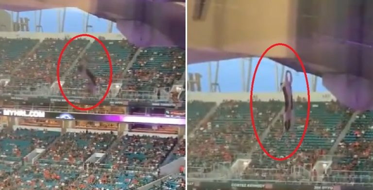 Video Shows Stray Cat Dangling From Upper Deck at Miami Hurricanes Football Game