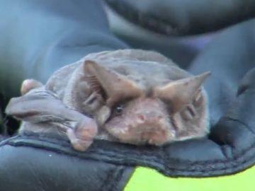 Illinois Man Dies Of Rabies After Bat Bites His Neck In His Sleep