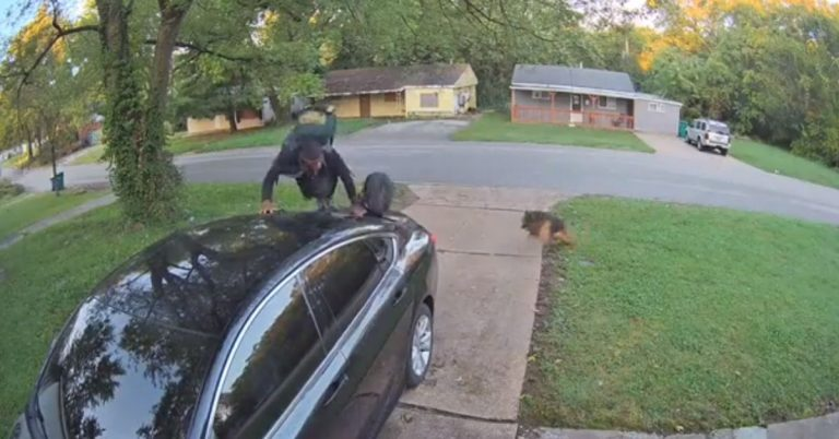 Guy Hops On Strangers Car To Get Away From 'Rin Tin Tin The K-9 Cop'